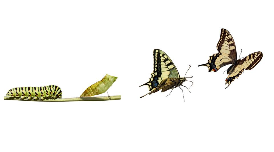 Три agile мифа, которые мешают вам меняться